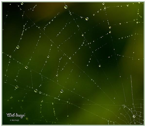 Web design by lobo_blanco