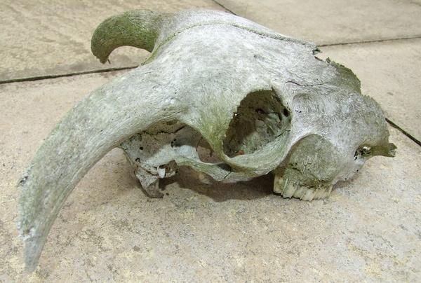 Skull by Rubydooby