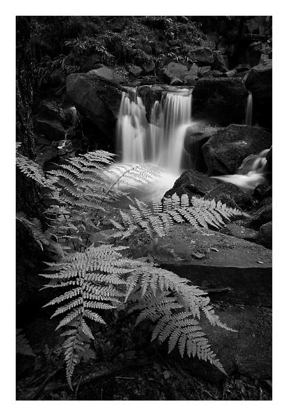 Fern & The Fall by ian.daisley