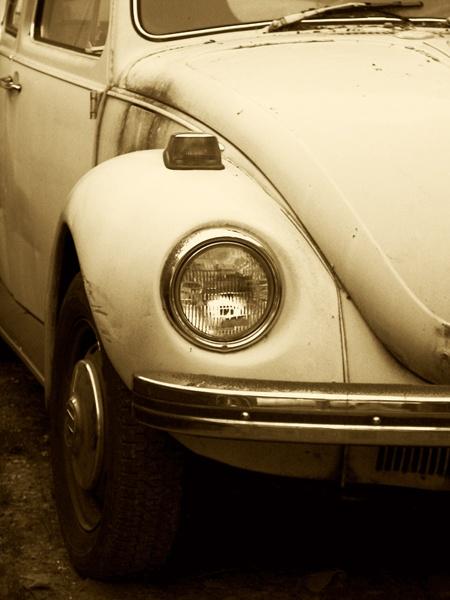 Bug by carmenfuchs