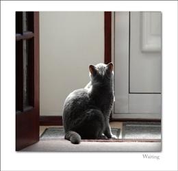 ... waiting ...