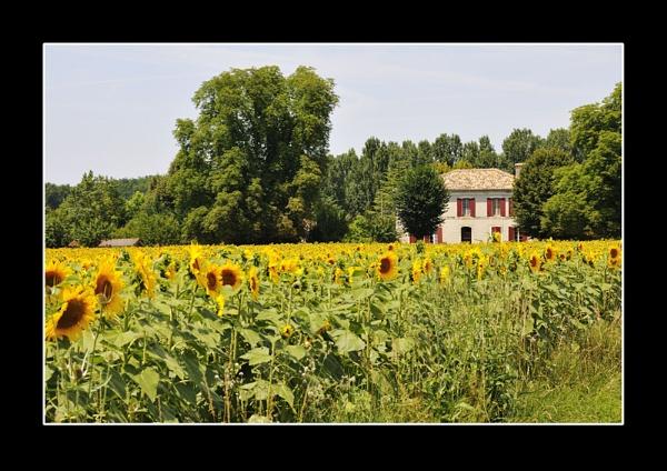 French Farm House by suemason