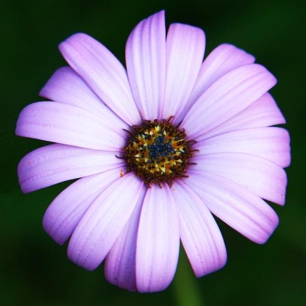Flower by alex102