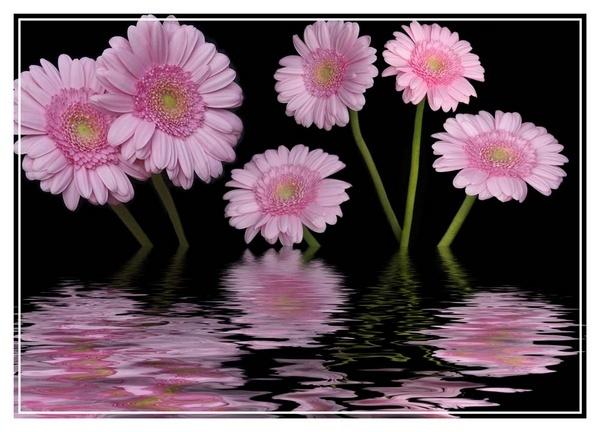 flower flood by jamie_w