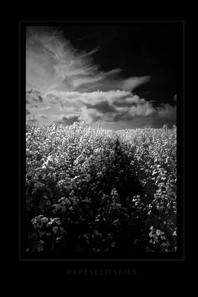 Rapeseed Skies by AndrewR