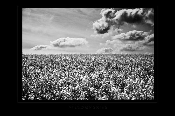 Field of Skies by AndrewR