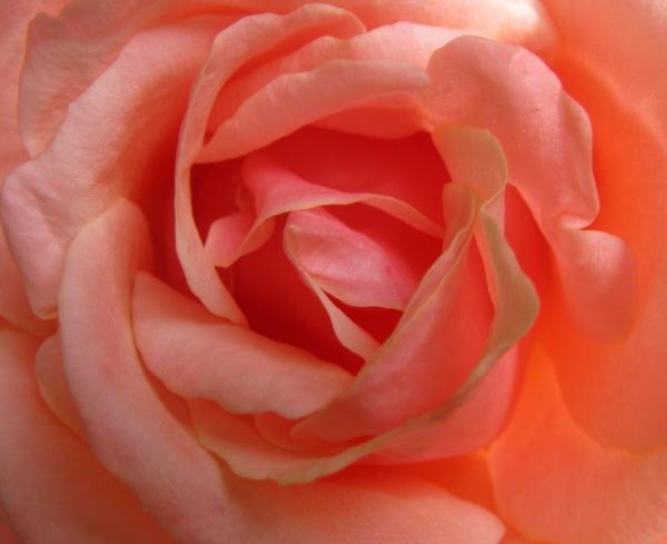 Soft Peach by LindaSJ