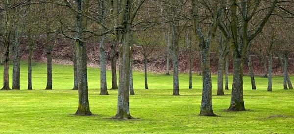 Tree study by Woofmix