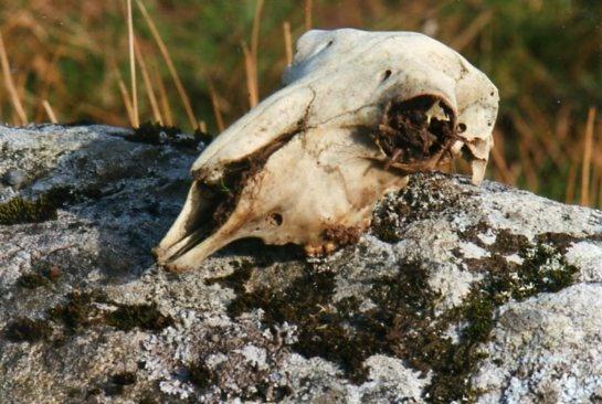 skull on rock by bernie32