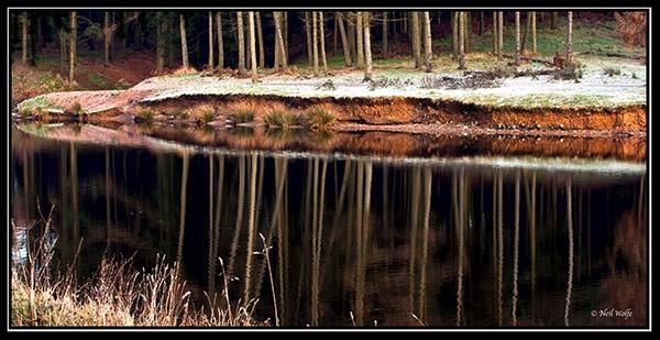 Dark Reflections by lobo_blanco