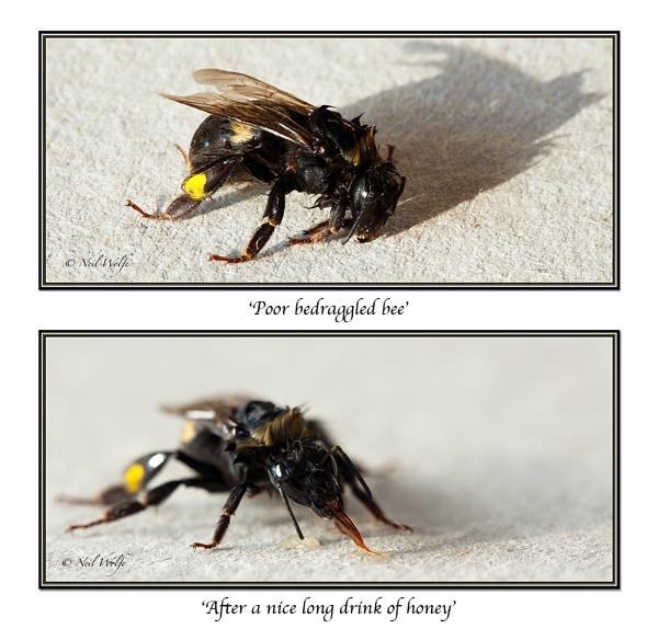 \'Bee Draggled\' by lobo_blanco