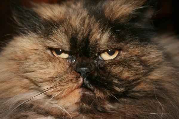 Tinka Cat by x_posure