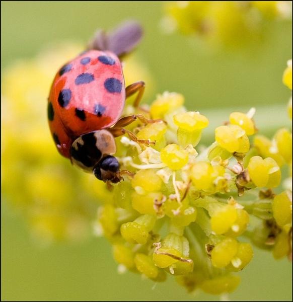 Ladybird by Eden