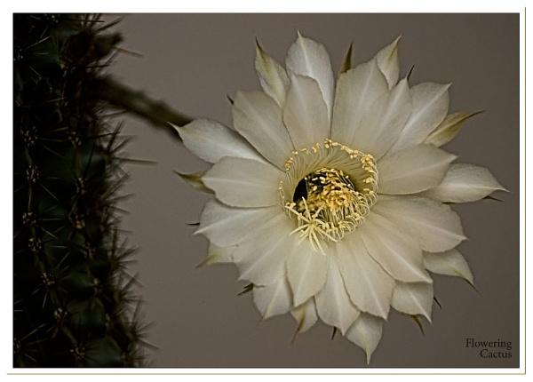 Cactus by Portknockie