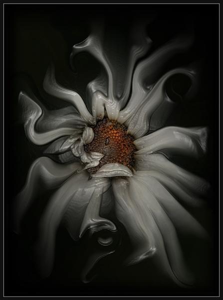 My Crazy Daisy by Morpyre