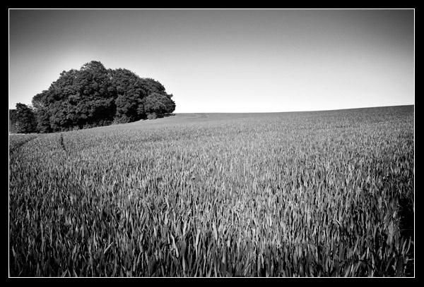 Field by FatHandedChap