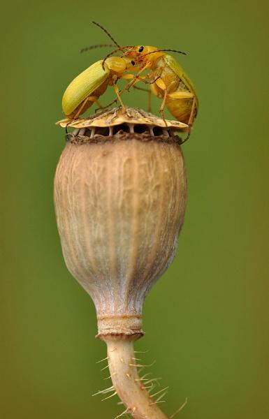 Bug fight by Rachelscott