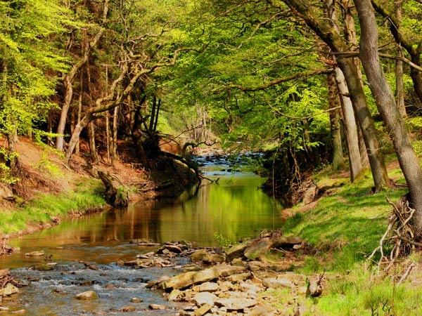 River Rye by terra