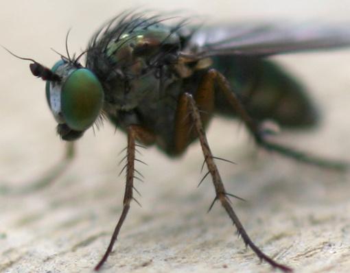 flies eye view by michaelo