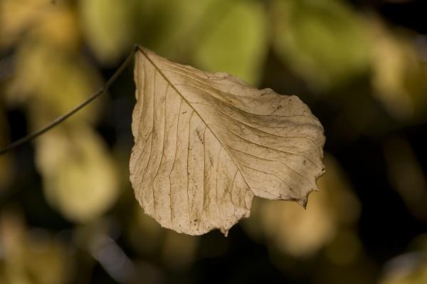 Winter Leaf by Radius12