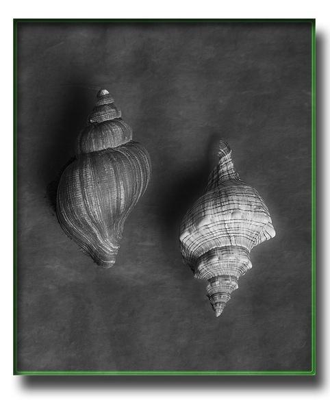 shells by mex