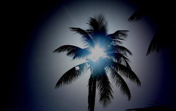 Palm Tree by k13wjd