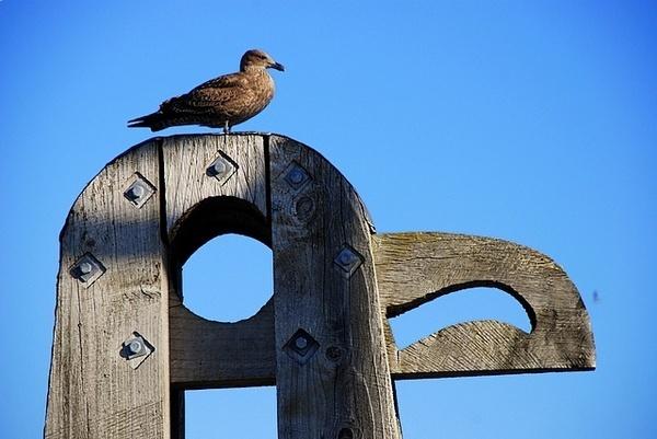 Bird on bird by nostramo