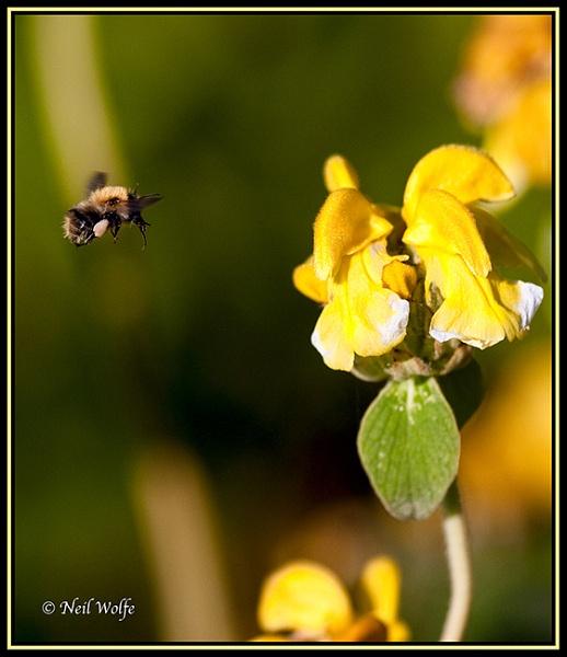 Nectar Points by lobo_blanco