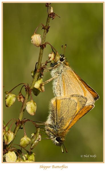 Butterfly Reunion by lobo_blanco