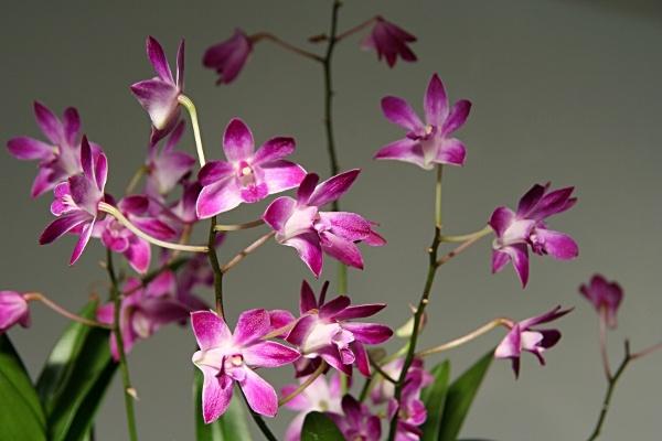 Bathtime orchid by stevenclark