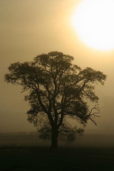 Misty Silhouete by stevenclark