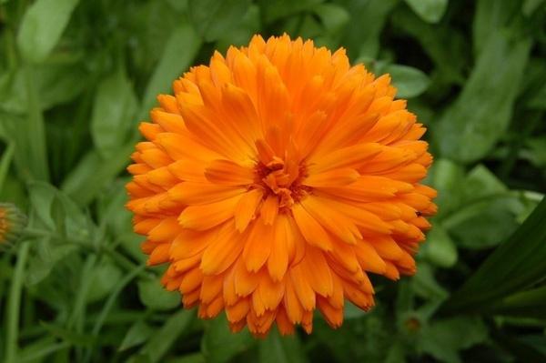 Flower power by wennyb