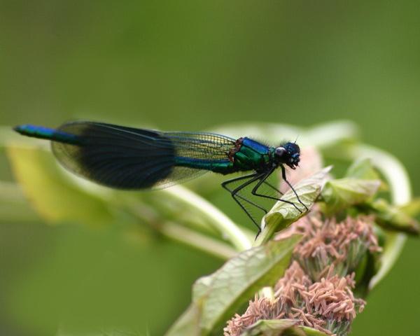 Damseily fly by Brian65