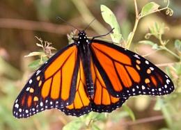 A New Monarch
