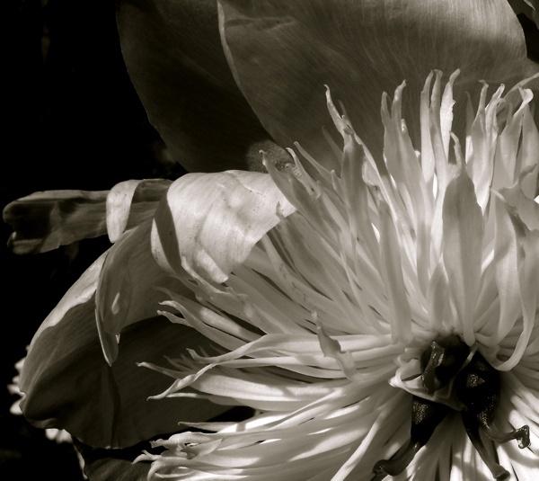 flower by LazFair