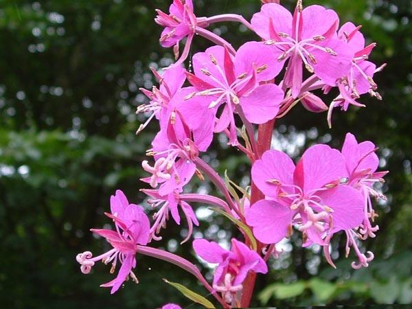 plant by linda68