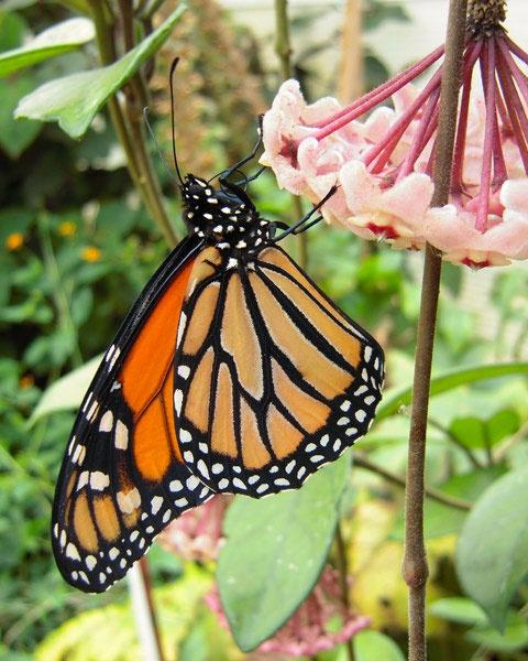 A Butterfly by grumpalot