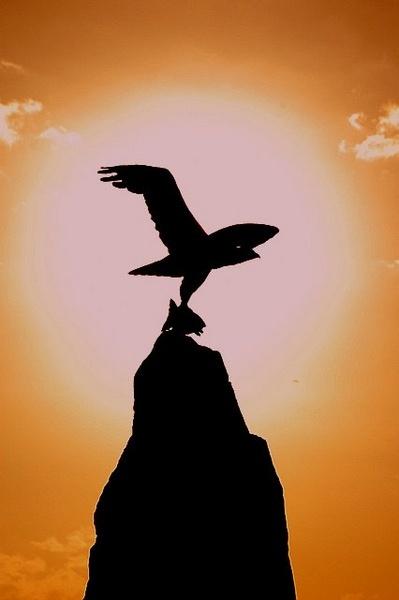 "\""Osprey Silhouette\"" by BigKiz"