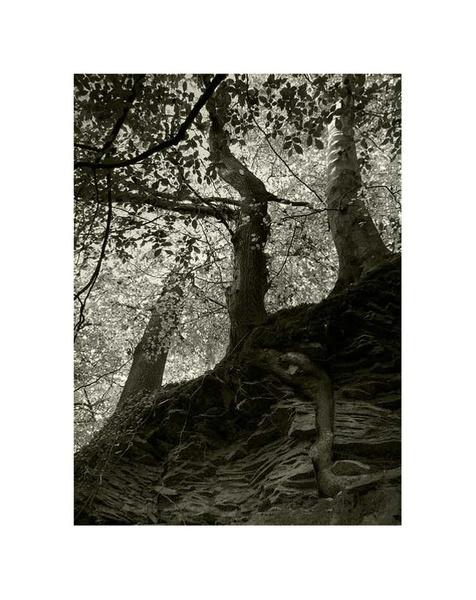 Back to me roots by Kim Walton
