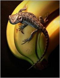 NO !!!!! There my Bananas