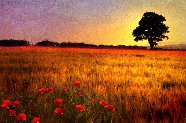 Solstice by Merciaman