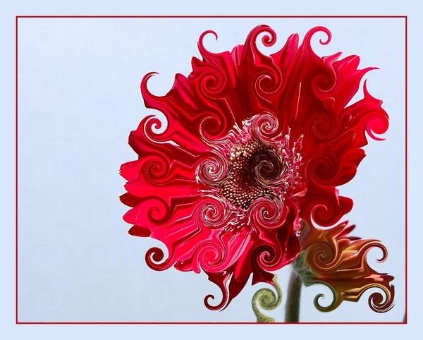 flower play by CherryMartin