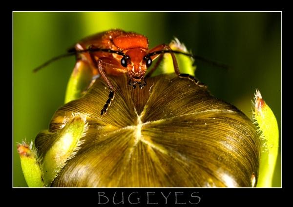 Bug eyes by allan_j