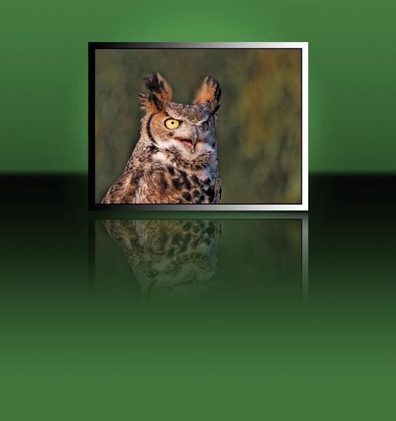 Canadian Great Horned Owl by BERTRAM