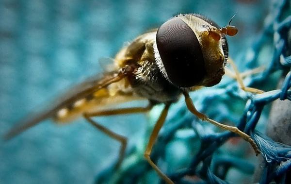 bugs life by tony147