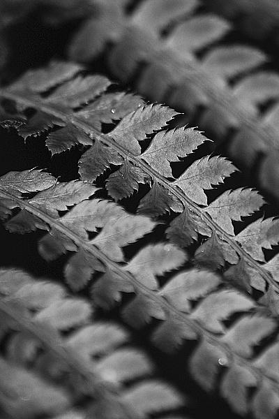ferns away by LeonSLR