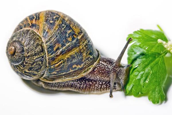 Snail by BOBtheDAZZLER