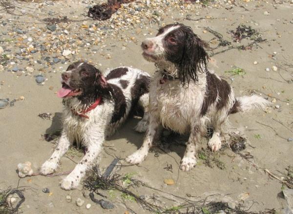 Barley & Bramble on the beach. by grockleJB