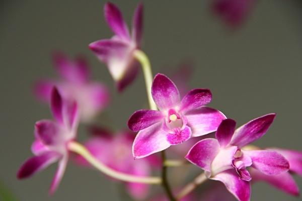 Bathtime orchid 2 by stevenclark