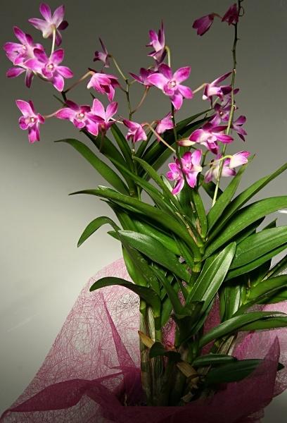 Bathtime orchid 3 by stevenclark